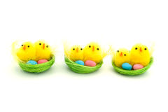 Three easter chicks in a nest Royalty Free Stock Photos
