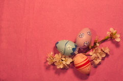 Three Easter eggs with blossoming apricot twig on pink background Stock Image