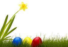Three easter eggs in grass with a daffodil Stock Photo