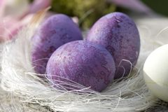 Three easter eggs in purple close-up Royalty Free Stock Photography