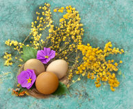 Easter card with mimosa Royalty Free Stock Images