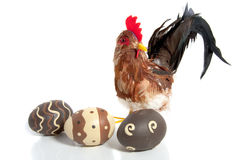 Three easter painted eggs in front of a chicken Royalty Free Stock Photos