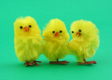 Three easter toy chickens on green Royalty Free Stock Photos