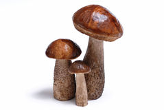 Three edible mushrooms Royalty Free Stock Image
