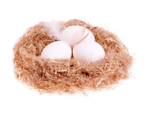 Three egg whites with a feather in the nest Royalty Free Stock Photo