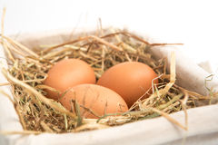 Three eggs in basket Stock Image