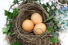 Three eggs in a bird's nest Stock Photos
