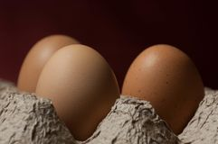 Three eggs in a cardboard egg tray. A close-up image of three eggs in a textured cardboard egg tray with a dark red background Stock Photos