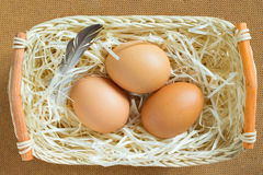 Three eggs and feathers are on the straw in a basket Royalty Free Stock Images