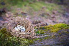 Three eggs in hay nest on moss Stock Photography