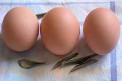 Three eggs in line Royalty Free Stock Photos