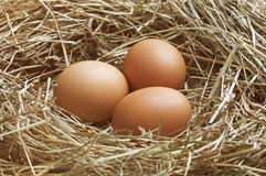 Three eggs in nest Royalty Free Stock Image