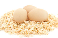 Three eggs in the nest Royalty Free Stock Image