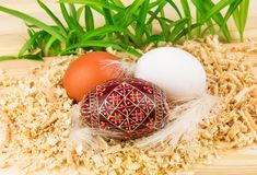 Three eggs in nest. With feathers Stock Photos