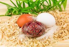 Three eggs in nest Stock Photos