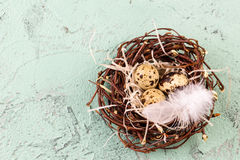 Three eggs in the nest for easter Royalty Free Stock Image