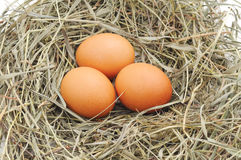 Three eggs in a nest. Royalty Free Stock Photos