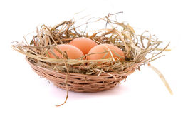 Three eggs in nest isolated Royalty Free Stock Image