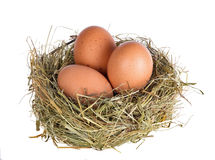 Three eggs in nest isolated on white Royalty Free Stock Photos