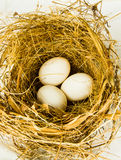 Three eggs in the nest Stock Image