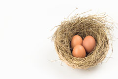 Three eggs in a nest. Three eggs in nest on white background Stock Images
