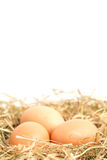 Three eggs nestled in straw nest Royalty Free Stock Image
