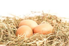 Three eggs nestled in straw Stock Photos
