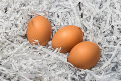 Three eggs in the pile of torn paper bits Royalty Free Stock Photos