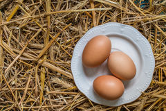 Three  eggs  in a plate on straw background Royalty Free Stock Image