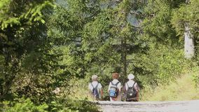Three elderly women trekking in woods around Slovenian Bohinj lake stock video footage