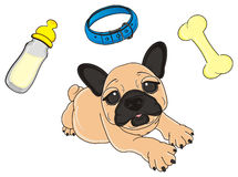 Three elements of stuffs of dog. Beige french bulldog lying near the collar, bone and bottle of milk Royalty Free Stock Images