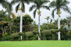 Three elephants of ivy Stock Photography