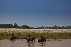 Three Elephants and Riders Going Down the River Royalty Free Stock Photos