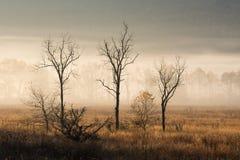 Three Empty Trees in Fall Royalty Free Stock Photography