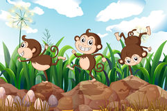 Three energetic monkeys Stock Photos