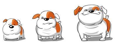 Three english Bulldogs cream and white Stock Images