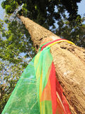Three fabric color wrap the old tree, the belief in thailand Stock Images