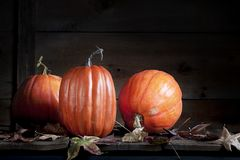 Three Fall Pumpkins with Fall Leaves Stock Photos
