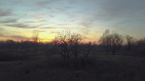 Three fall sunset. Fall three, naked without leaves, aerial fly video stock footage