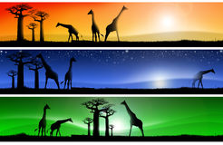 Three fantastic african landscapes. Three banners with african colorful landscapes of fantasy, with grass, baobab trees and giraffes Royalty Free Stock Photography