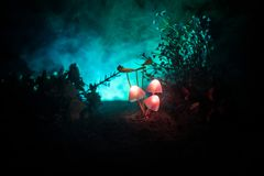 Three fantasy glowing mushrooms in mystery dark forest close-up. Beautiful macro shot of magic mushroom or three souls lost in ava Stock Photo