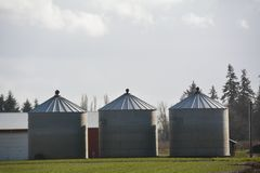 Three Farm Silos West of Salem, Oregon. Here are three farm produce storage buildings west of Salem, Oregon Stock Image