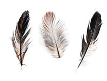 Three feathers Stock Photo