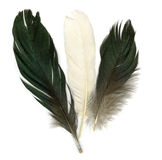 Three feathers Royalty Free Stock Image
