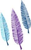 Three feathers Royalty Free Stock Photo