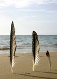 Three Feathers Beach. Three feathers standing up on a sandy beach Stock Images
