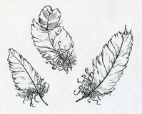 Three feathers drawn with ink. Hand drawin ink sketch of three different feathers vector illustration
