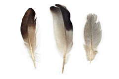 Three feathers Stock Image