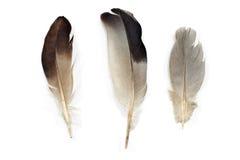 Three feathers Stock Image