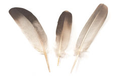 Three feathers isolated Royalty Free Stock Images